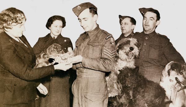 Beachcomber being presented with his PDSA Dickin Medal by Dorothea St. Hill Bourne, Secretary of the PDSA Allied Forces Mascot Club. Beachcomber is being held by Sergeant Andre Meischke of the Royal Corps of Signals. Photo: Britain's People's Dispensary for Sick Animals (PDSA).