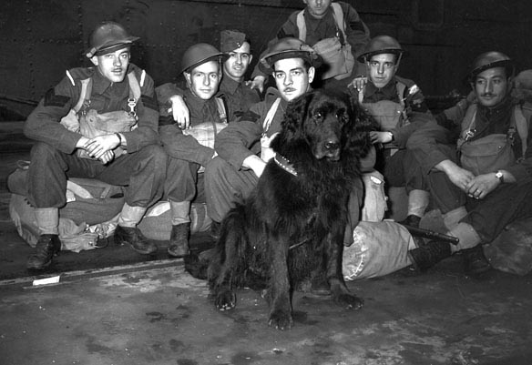 Infantrymen of C Company, Royal Rifles of Canada, and their mascot en route to Hong Kong. Vancouver, British Columbia, Canada, ca. 27 October 1941. Photo: Library and Archives Canada, Online MIKAN no. 3241498.